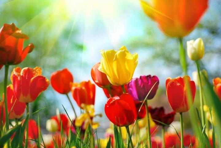 Meditazione speciale del momento di equinozio di primavera